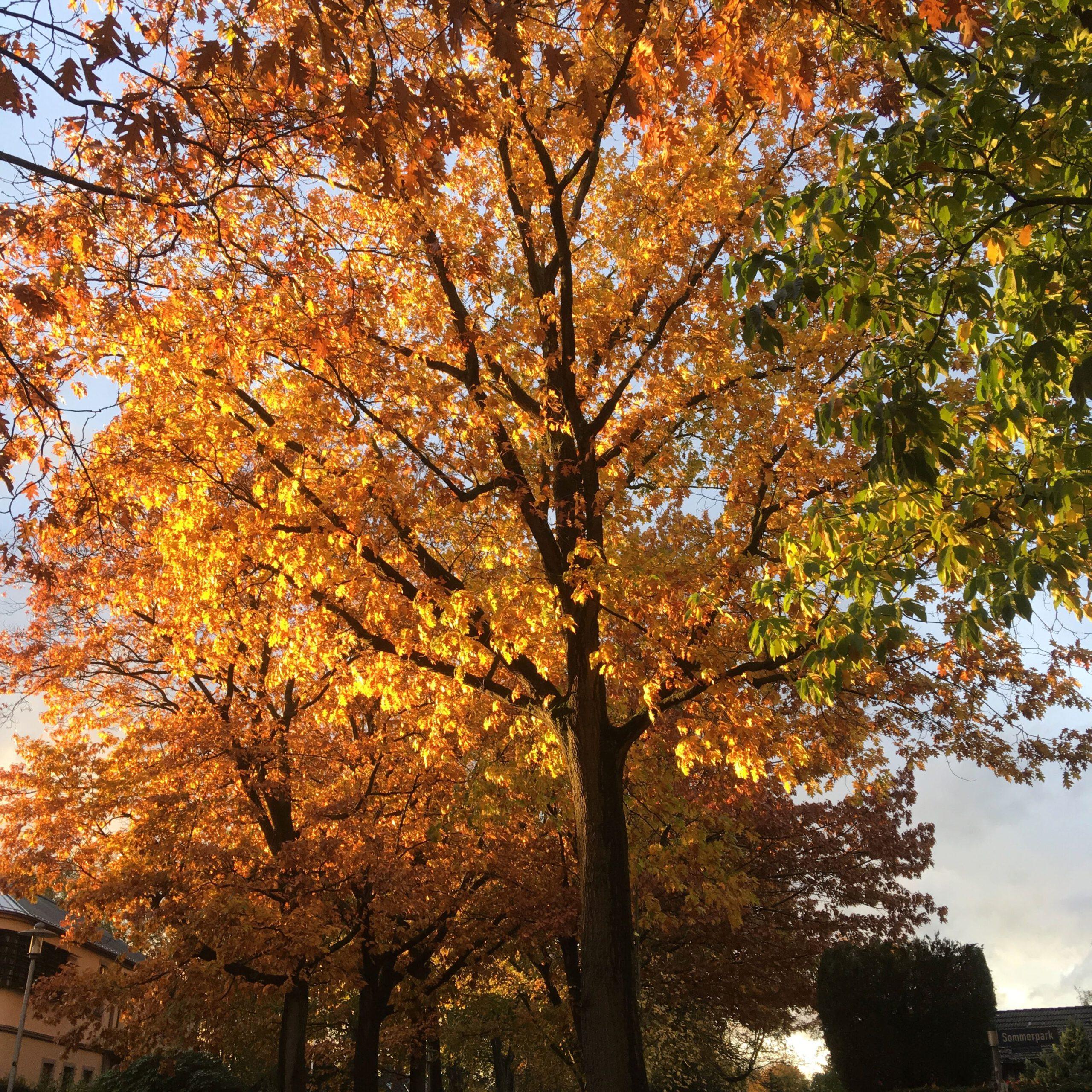 Webdesign Ahrensburg – Herbst